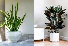 natural air purifiers plant