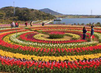 tulip festival srinagar 2019