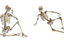 types of bones in human body in hindi