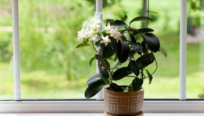 Bedroom Plants Ideas