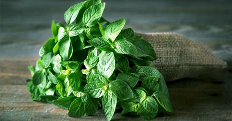 benefits of mint in hindi