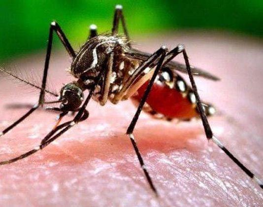 chikungunya ke lakshan