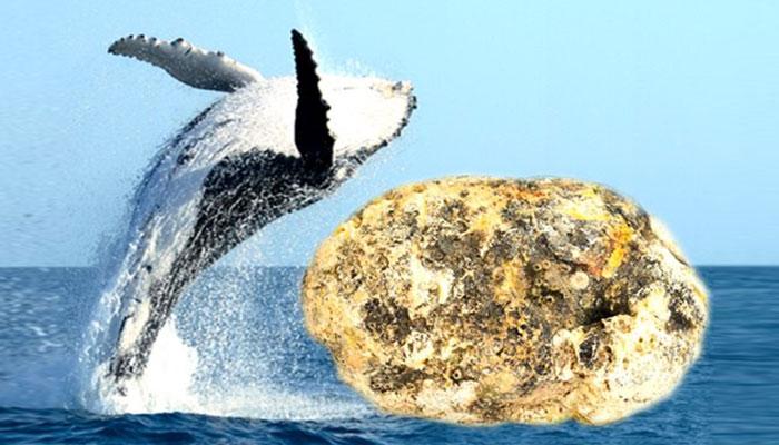 whale fish vomit