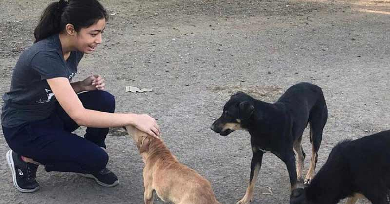 Chandani Grover Save Stray Dogs Animals