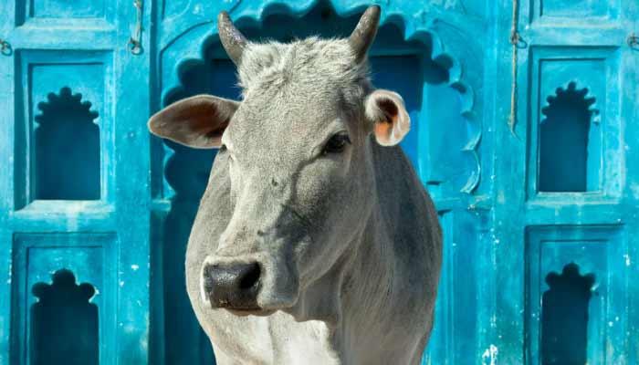 Shabbir Sayyad Padmashree
