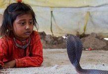 snake village in maharashtra