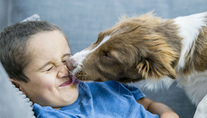 coronavirus found in animals know how to take care of pet