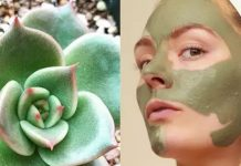 Benefits of Cactus Face Mask