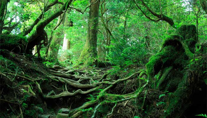 Ogihara japan forest haunted Forest