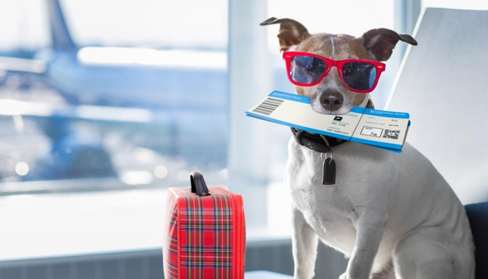 Private Jet For Pets for rs 9.06 Lakh