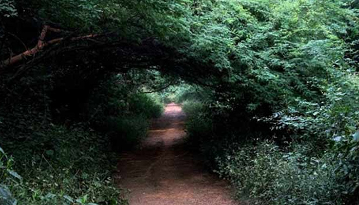 Sanjay Van Haunted Places