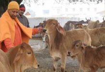Uttar Pradesh will be punished on cow slaughter