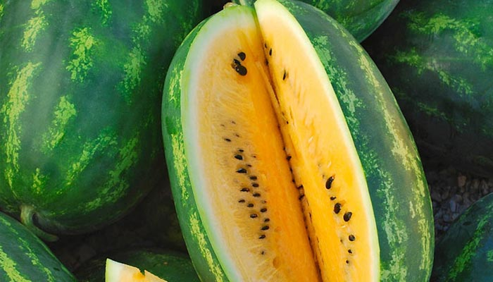 Yellow Watermelon Is Attractive