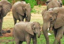 bihar man donates his entire land to two elephants