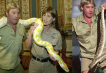 steve irwin Viral Video