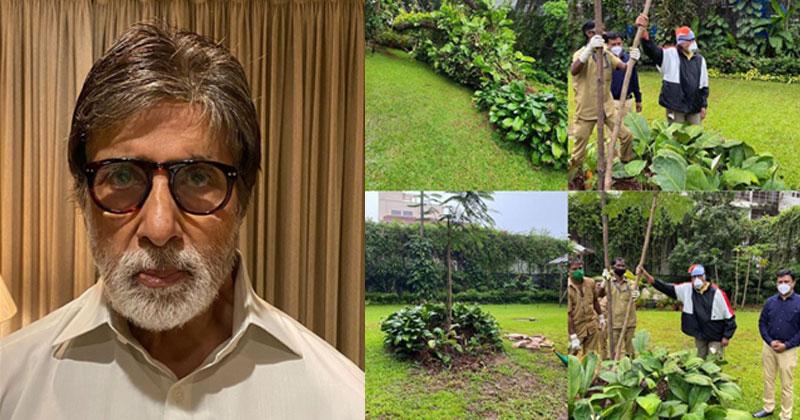 Amitabh Bachchan planted a Gulmohar Sapling