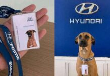 Car Showroom Hires Dog