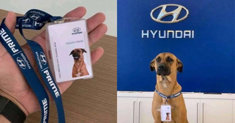 Car Showroom Hires Dog