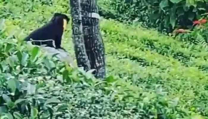 Nilgiri Marten Viral Video