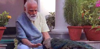 PM Modi Peacock Video Targeted