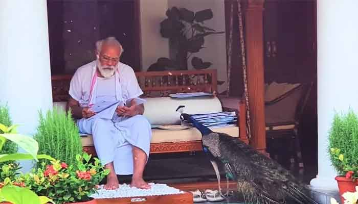 Pm Modi Viral Peacock Video