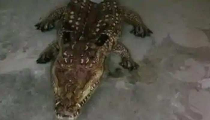 Cop responds to call about Alligator In A Storage Shed