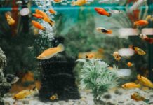 Benefits Of Fish Aquarium At Home