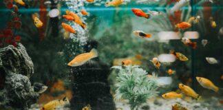 Benefits Of Fish Aquarium At Home