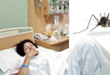 How Does Dengue Mosquito Attack