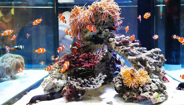How To Keep Your Fish Aquarium