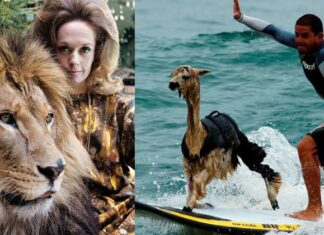 Pictures Of Unusual Family Pets