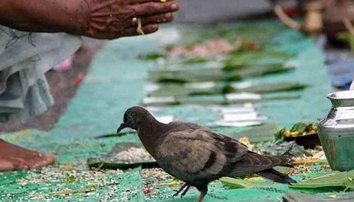 Why Feed Birds And Animal In Pitru Paksha