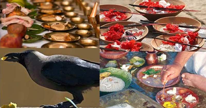 You Sould Feed Birds And Animal In Pitru Paksha