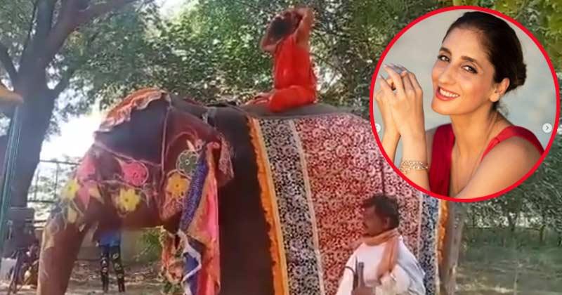 Farah Khan Ali Tweet On Ramdev Baba Falls On Elephant