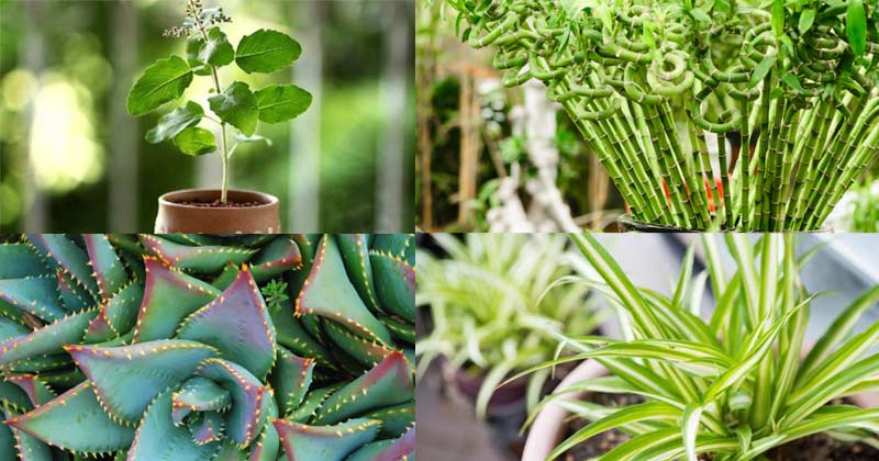 Plants For Home & Office In Hindi