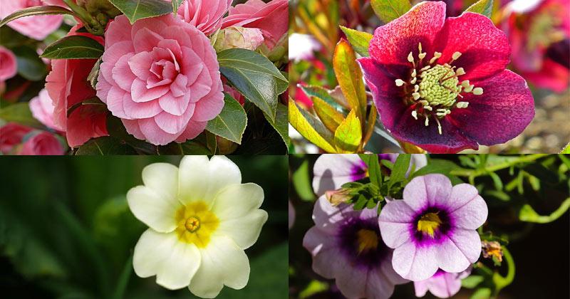 Winter Season Flowers