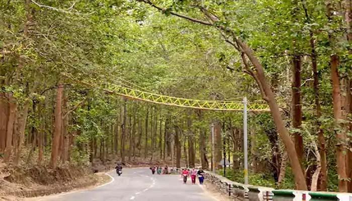Eco Bridge For Save Animals In Nainital