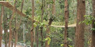 Eco Bridge In Uttarakhand
