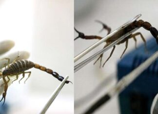Man Farms Scorpions And Snakes For Venom