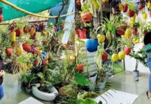 Bhopal Woman Sakshi Bhardwaj Grows Exotic Plants