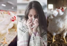 Bird Flu Prevention Tips