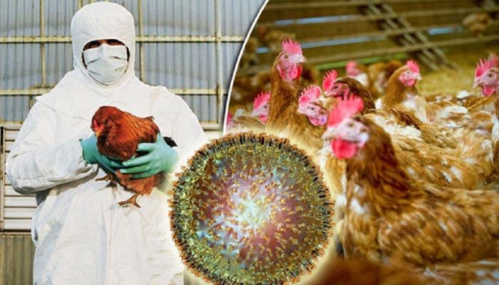 Bird Flu Se Bachav Kaise Kare