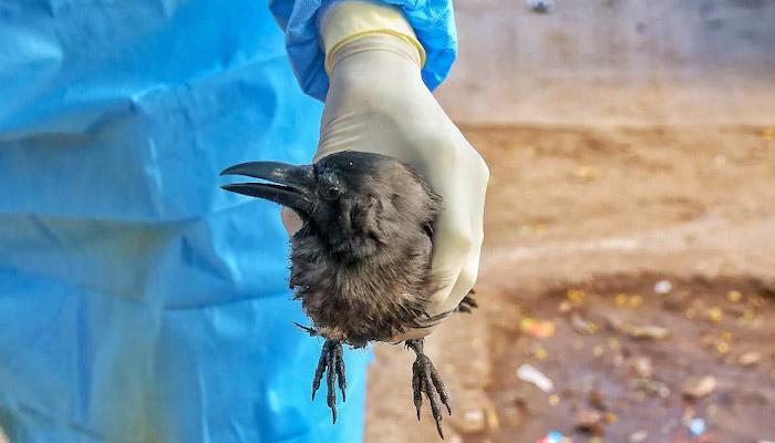 Bird Flu Se Kaise Kare Bachav