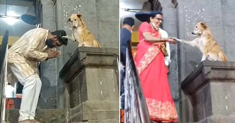 Dog Blesses Devotees
