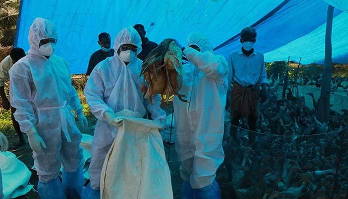 Ghazipur Chicken Market Bird Flu Test Negative