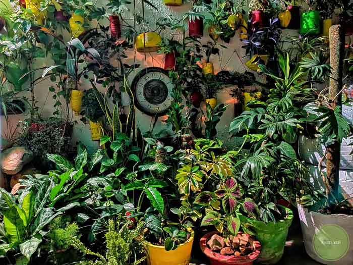 Sakshi Bhardwaj Organic Gardening