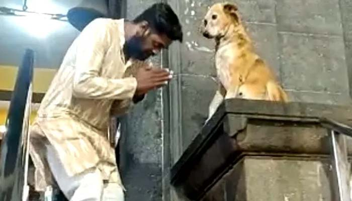 Shree Siddhivinayak Mandir Dog Blesses Devotees