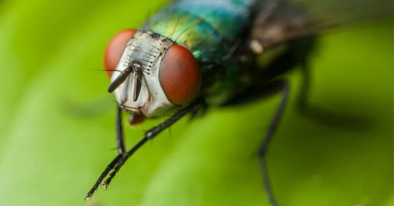 Why House Fly Rub There Hands In Hindi