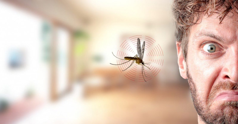 Why Mosquitoes Buzz Near Ear In Hindi