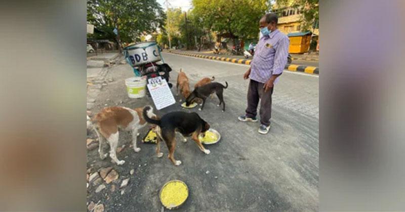 Man Feeding 150 Street Dogs Daily